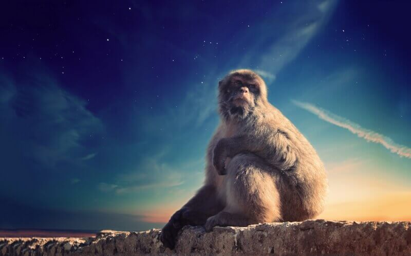 猿の顔 寺田寅彦